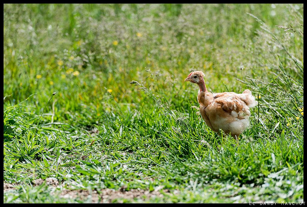 Solitaire en herbe