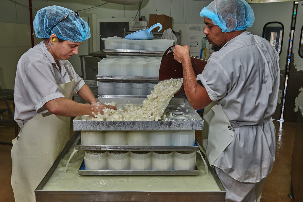 Reportages en fromageries Tarnaises