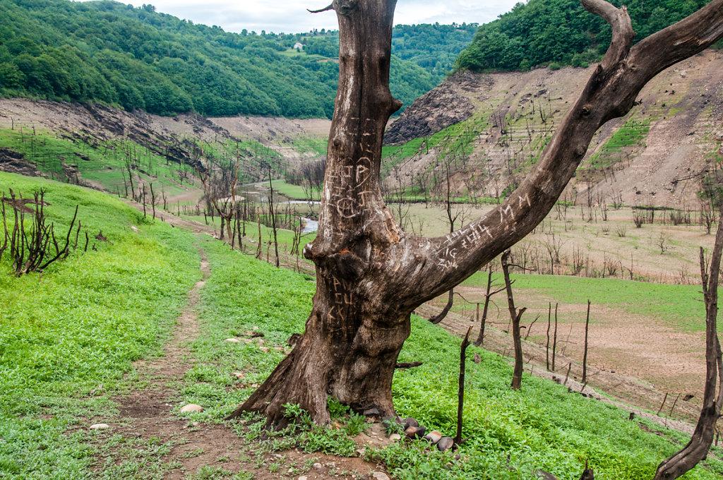 Forêt sèche_Sarrans