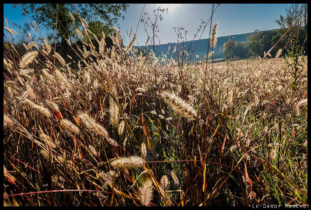 Épis d'automne
